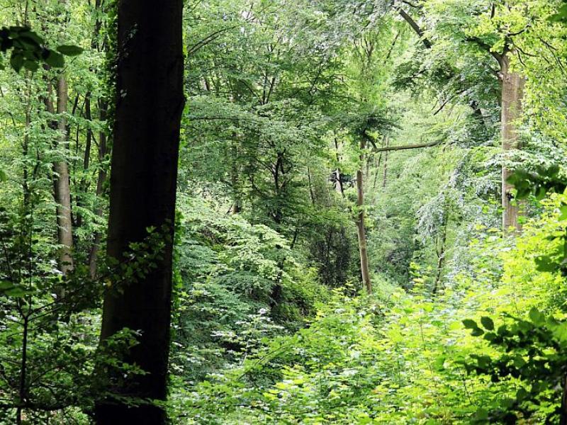 06-rainer_ahrens-titel-hoehenweg