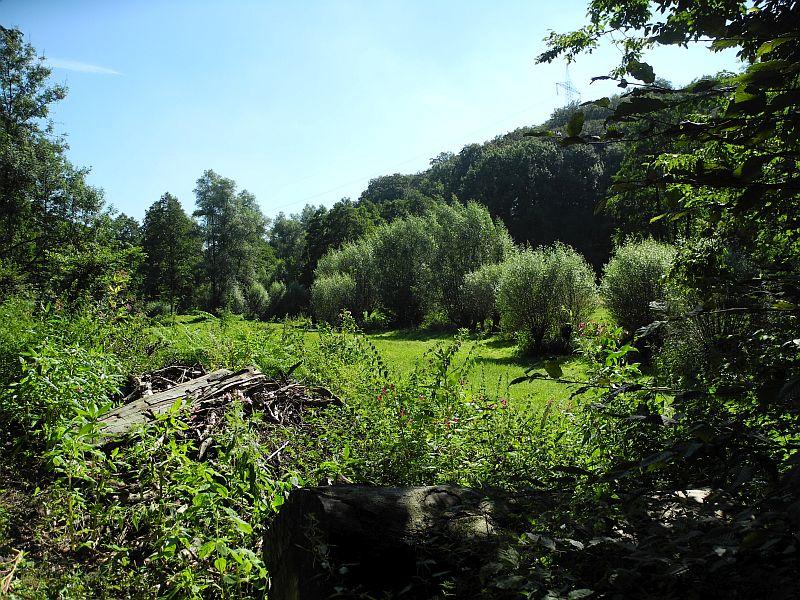 08-birgit_evertz-titel buschfeld